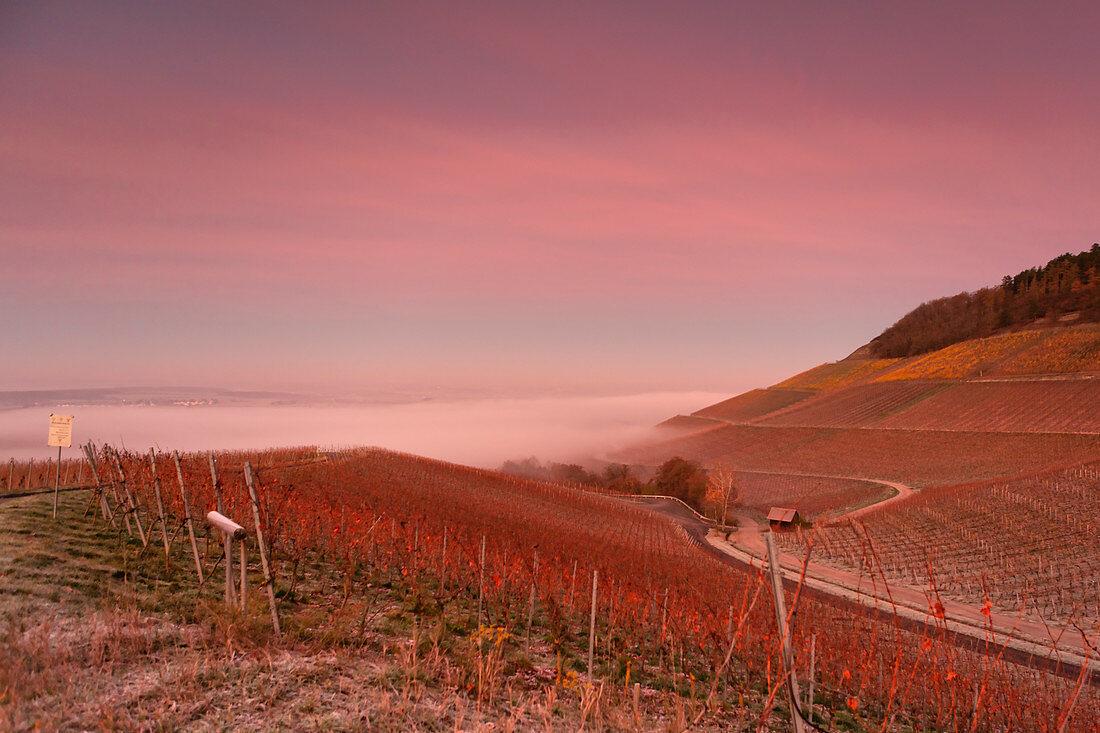 Morning mood on Julius Echter Berg, Iphofen, Kitzingen, Lower Franconia, Franconia, Bavaria, Germany, Europe