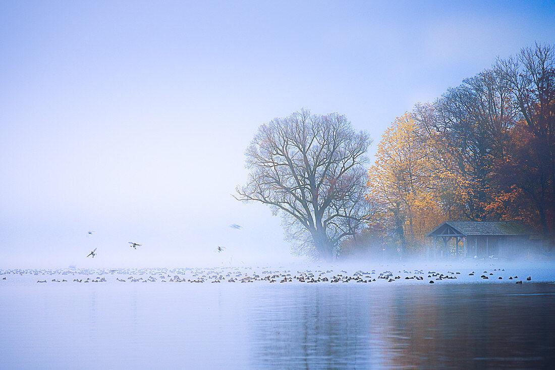 Nebel am Starnberger See, Roseninsel, Feldafing, Bayern, Deutschland