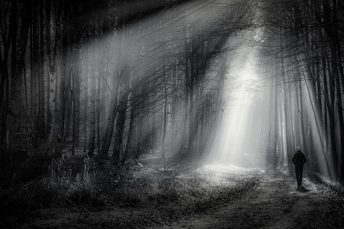 Man walking in the forest in fog and rays of light ,monthshausen, Bavaria, Germany