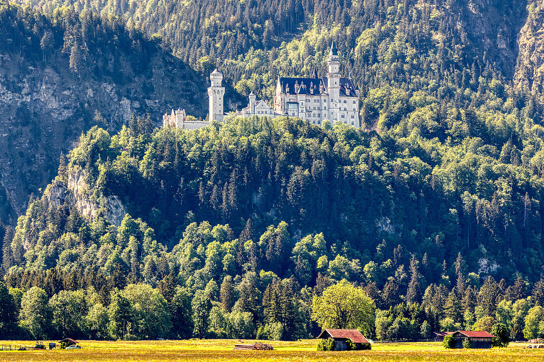 Neuschwanstein Castle in the morning light from Alterschrofen, Bavarian Allgäu, Bavaria, Germany