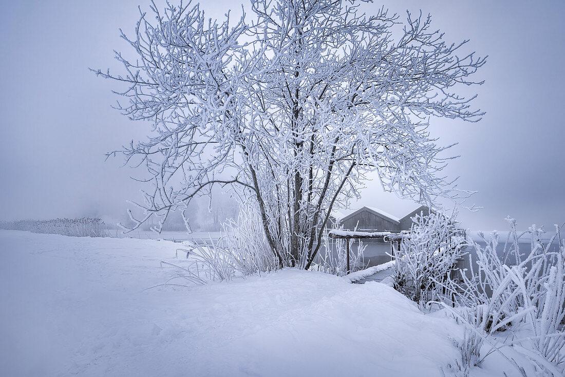 Cold winter morning at Kochelsee, Upper Bavaria, Bavaria, Germany, Europe