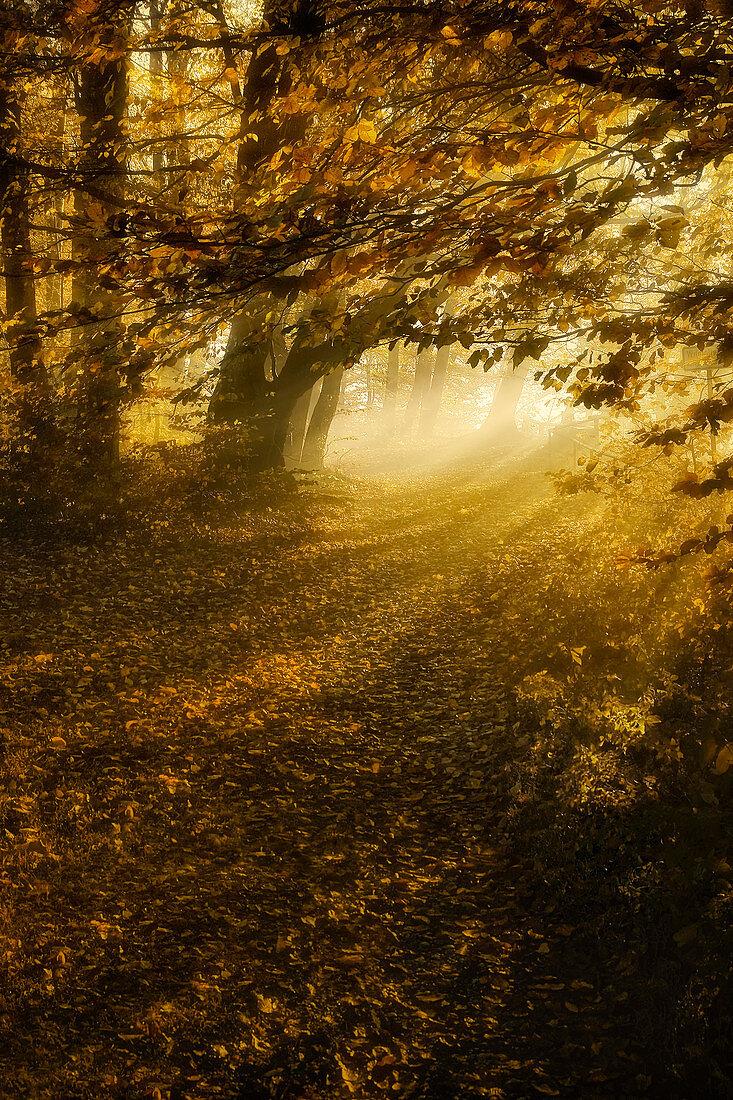 Sunny autumn morning on the Isar high bank, Bavaria, Germany, Europe