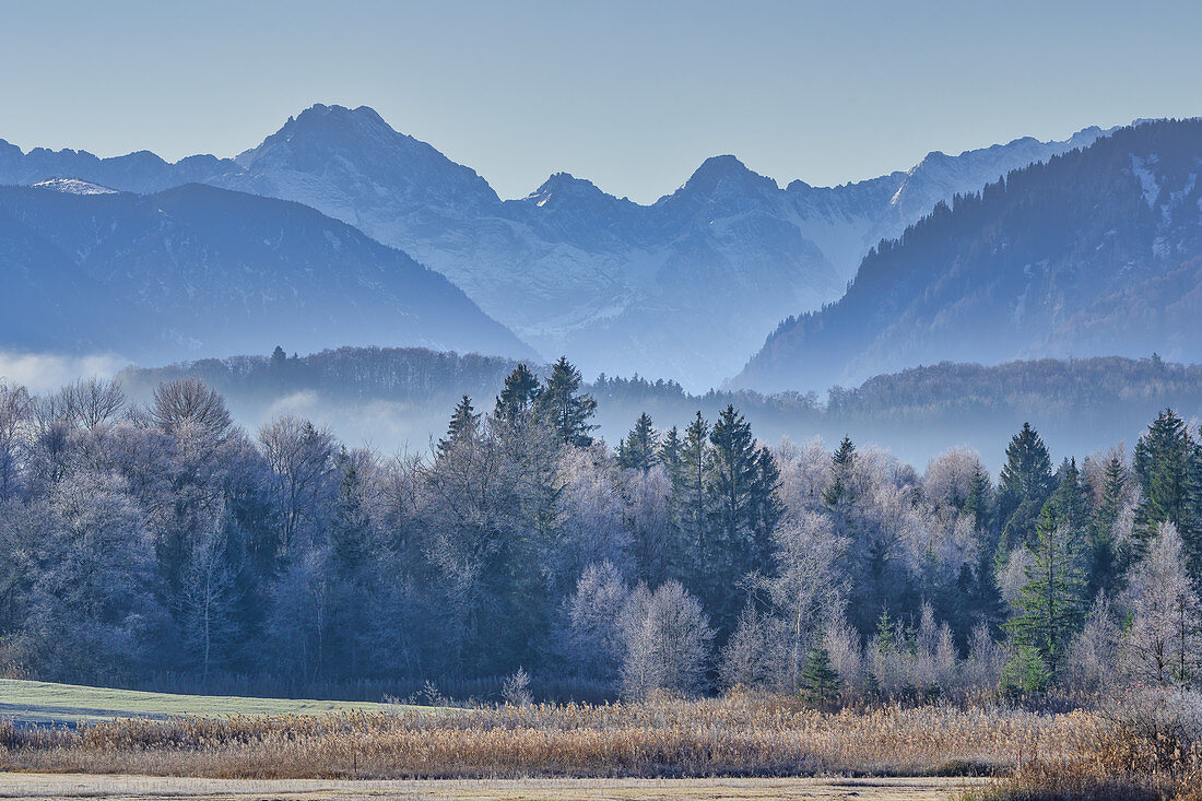 View over the moor at the Staffelsee to the Bavarian Alps, Uffing, Upper Bavaria, Bavaria, Germany