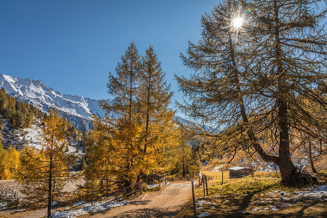 Path through the old larch forest in the Ködnitztal, Kals am Großglockner, East Tyrol, Tyrol, Austria