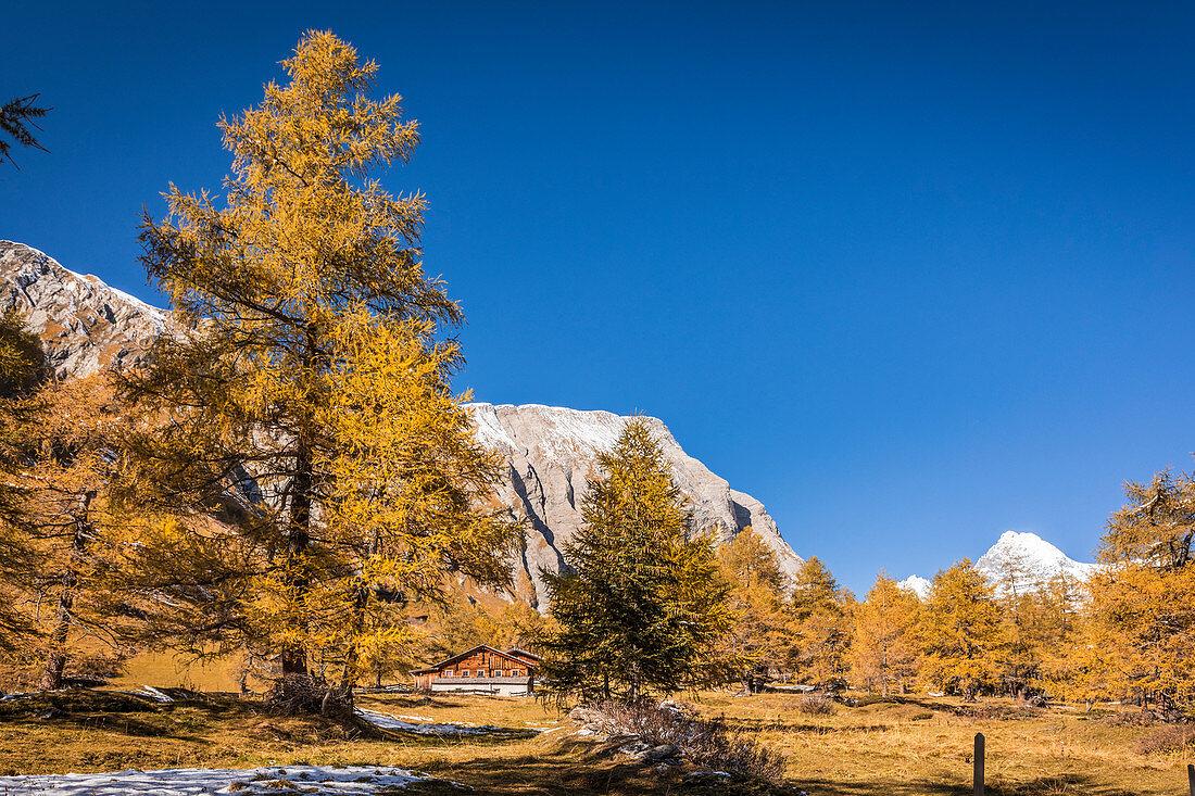 Herbstlicher Lärchenwald im Ködnitztal, Kals am Großglockner, Osttirol, Tirol, Österreich