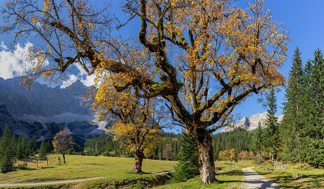 The Kleine Ahornboden in the Karwendel in autumn, Hinterriß, Kleiner Ahrnboden, Karwendel, Tyrol, Austria