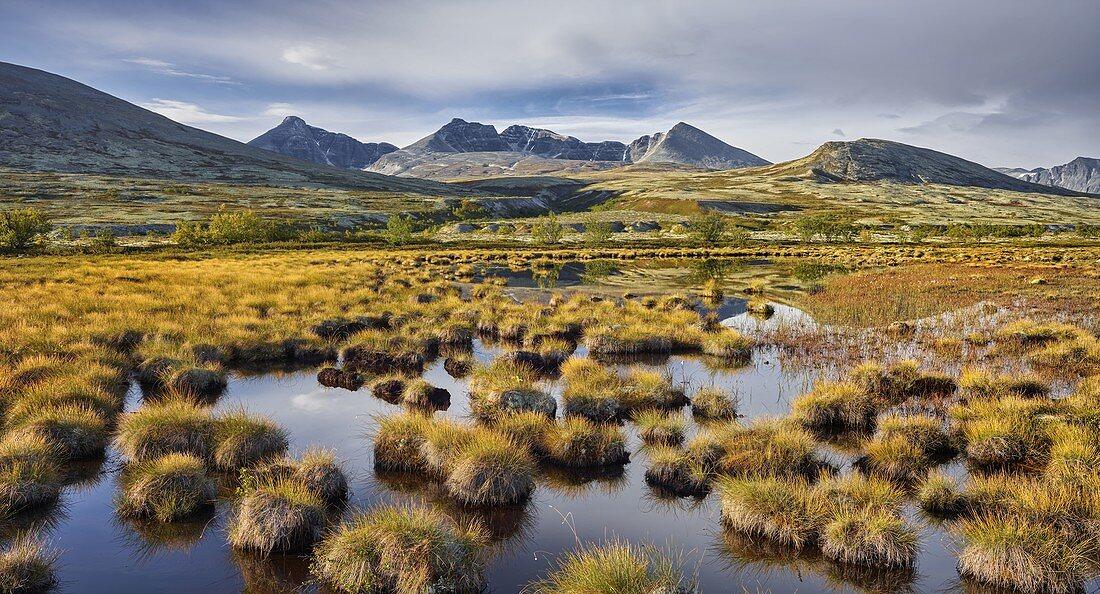 Swamp, pond, Högronden massif, Döralen, Rondane National Park, Oppland, Norway