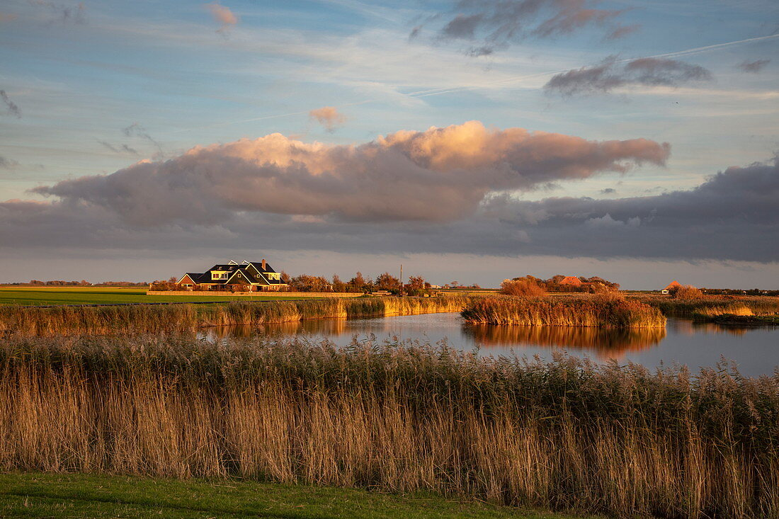 Reeds on the lakeshore and clouds in the late afternoon, near Den Burg, Texel, West Frisian Islands, Friesland, Netherlands, Europe