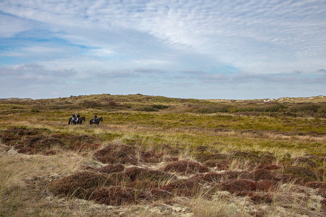 Three people on horses ride on path through sand dunes, near Hoorn, Terschelling, West Frisian Islands, Friesland, Netherlands, Europe