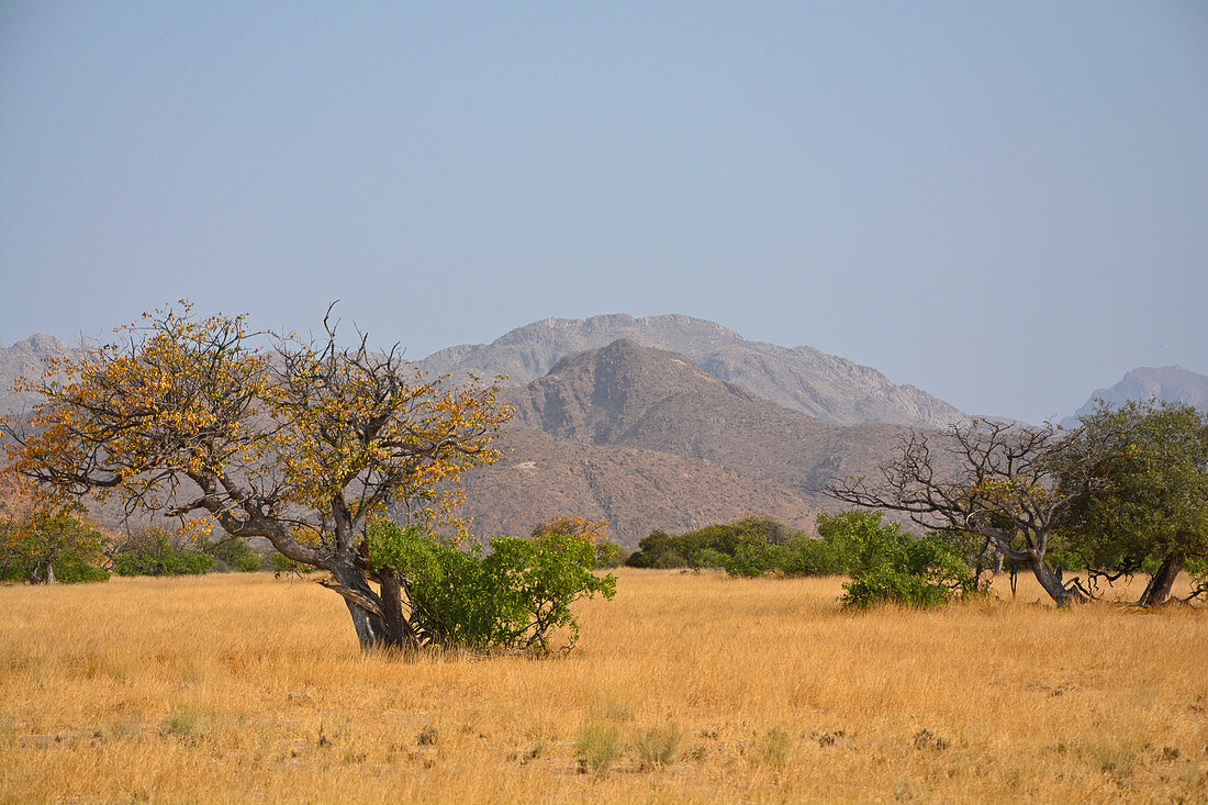 Angola; in the southern part of Namibe Province; Iona National Park; End of dry season; mountainous landscape; Grass savannah with low acacia trees and other bushes