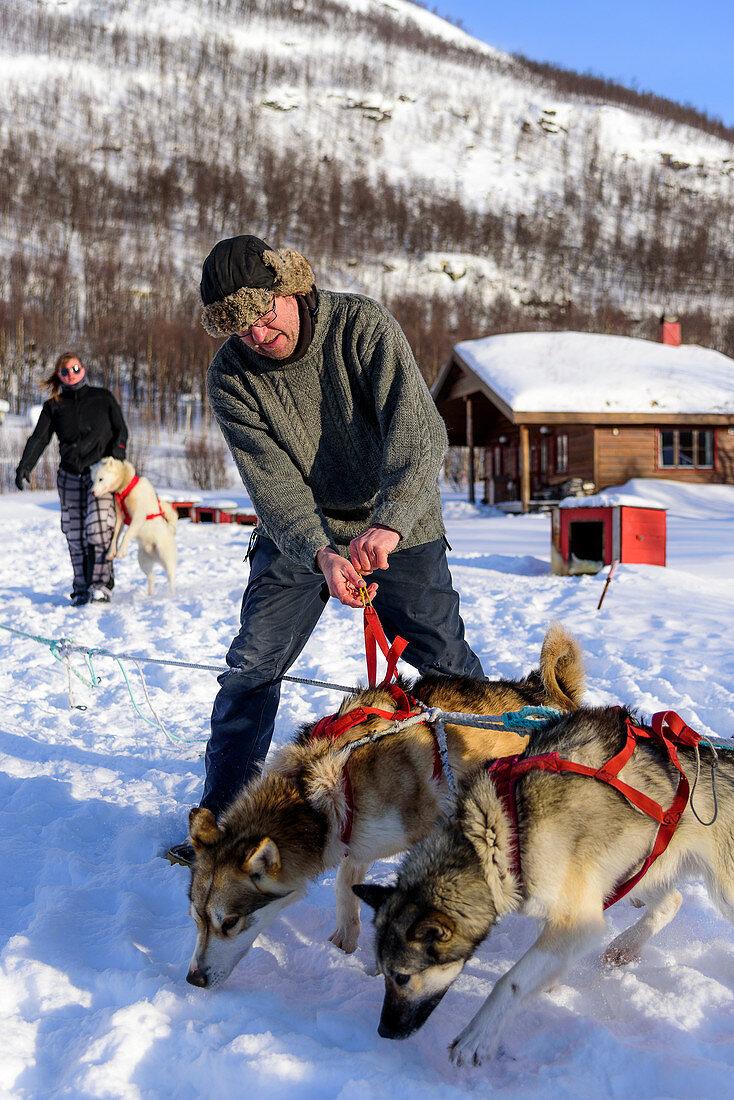 Sled dog is harnessed, Björn Klauer's husky farm, Bardufoss, Norway
