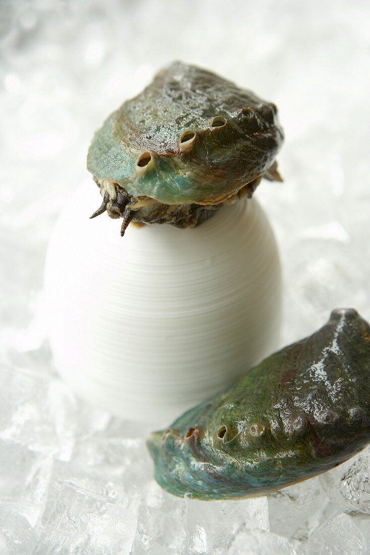 Live abalone (sea snails) on ice