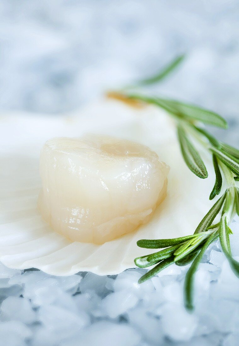 Scallop and rosemary