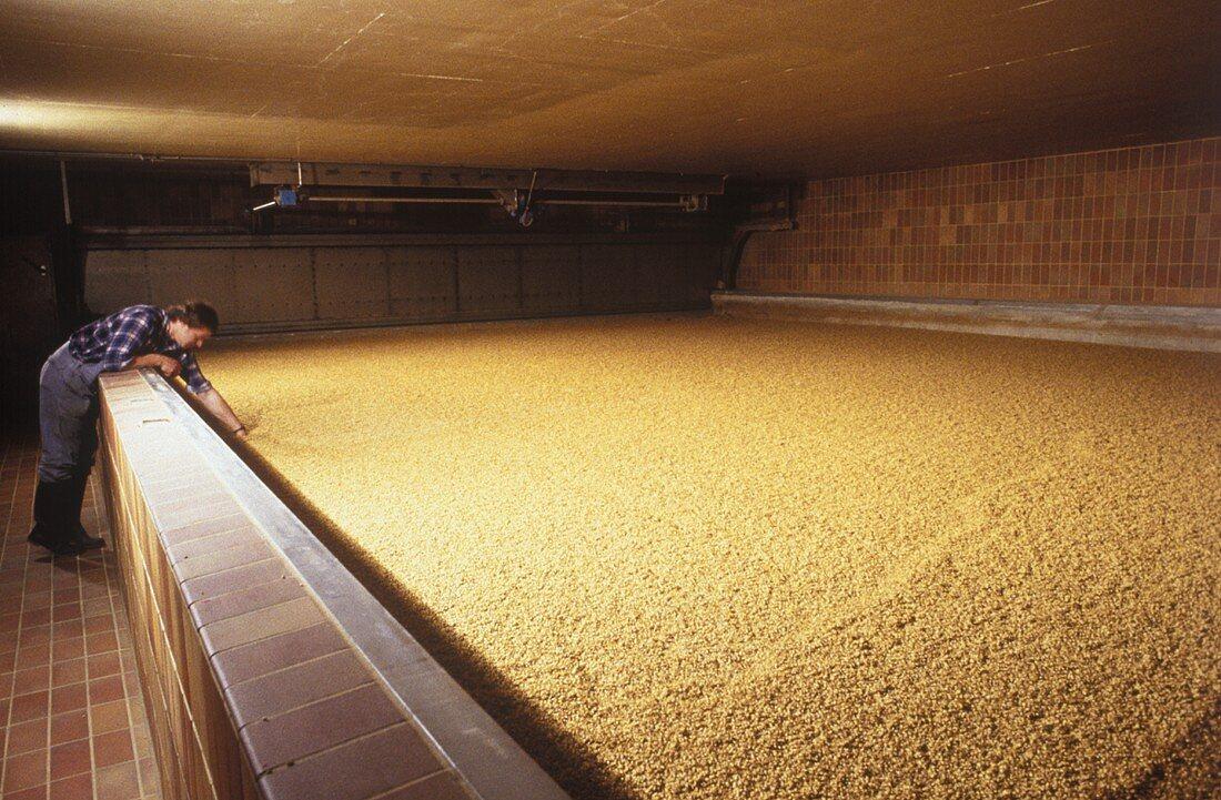Soaking of Brewing Barley in a Barrel