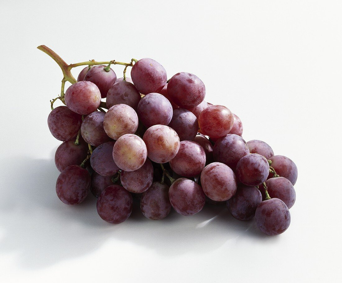 Red grapes, variety: Palieri (Vitis vinifera) from Italy