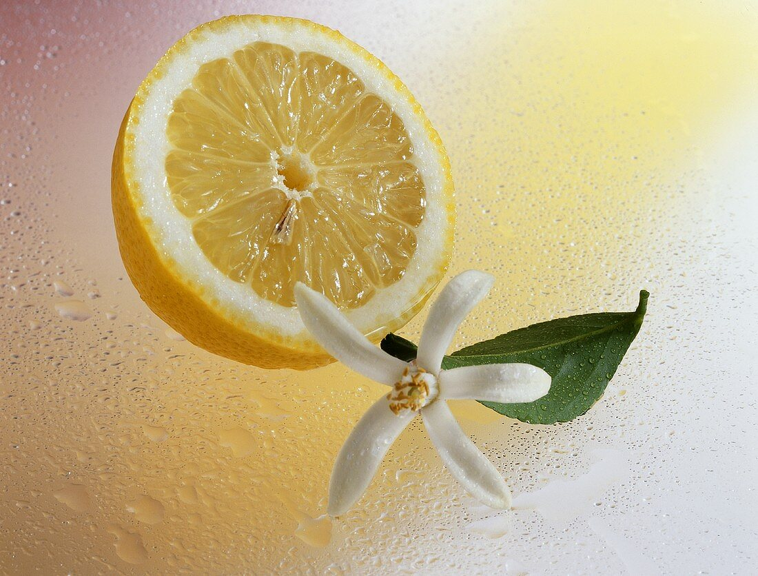 Half a lemon (Citrus limon) with flower and leaf