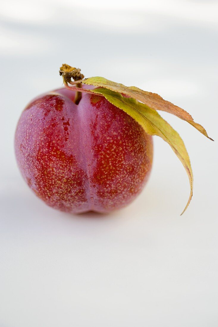 Red plum with stalk and leaves