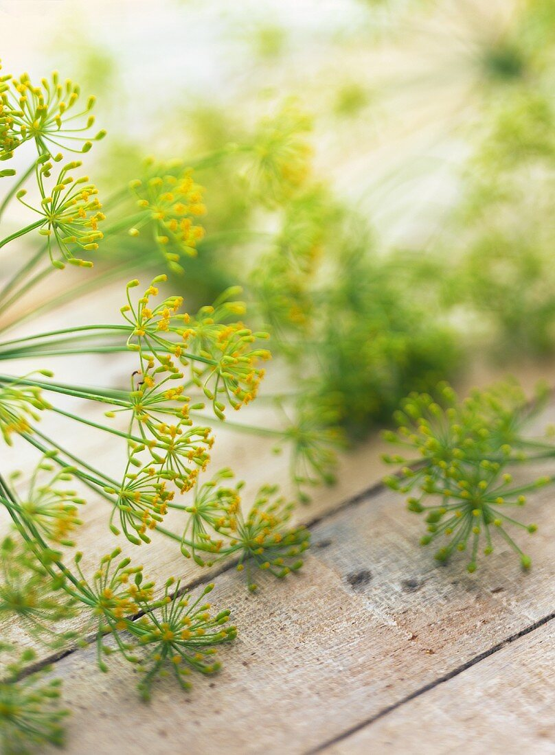 Dill flowers