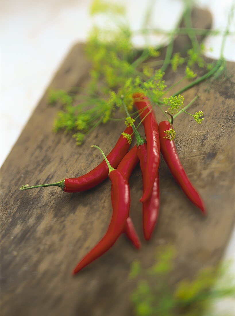 Red chili peppers and dill flowers