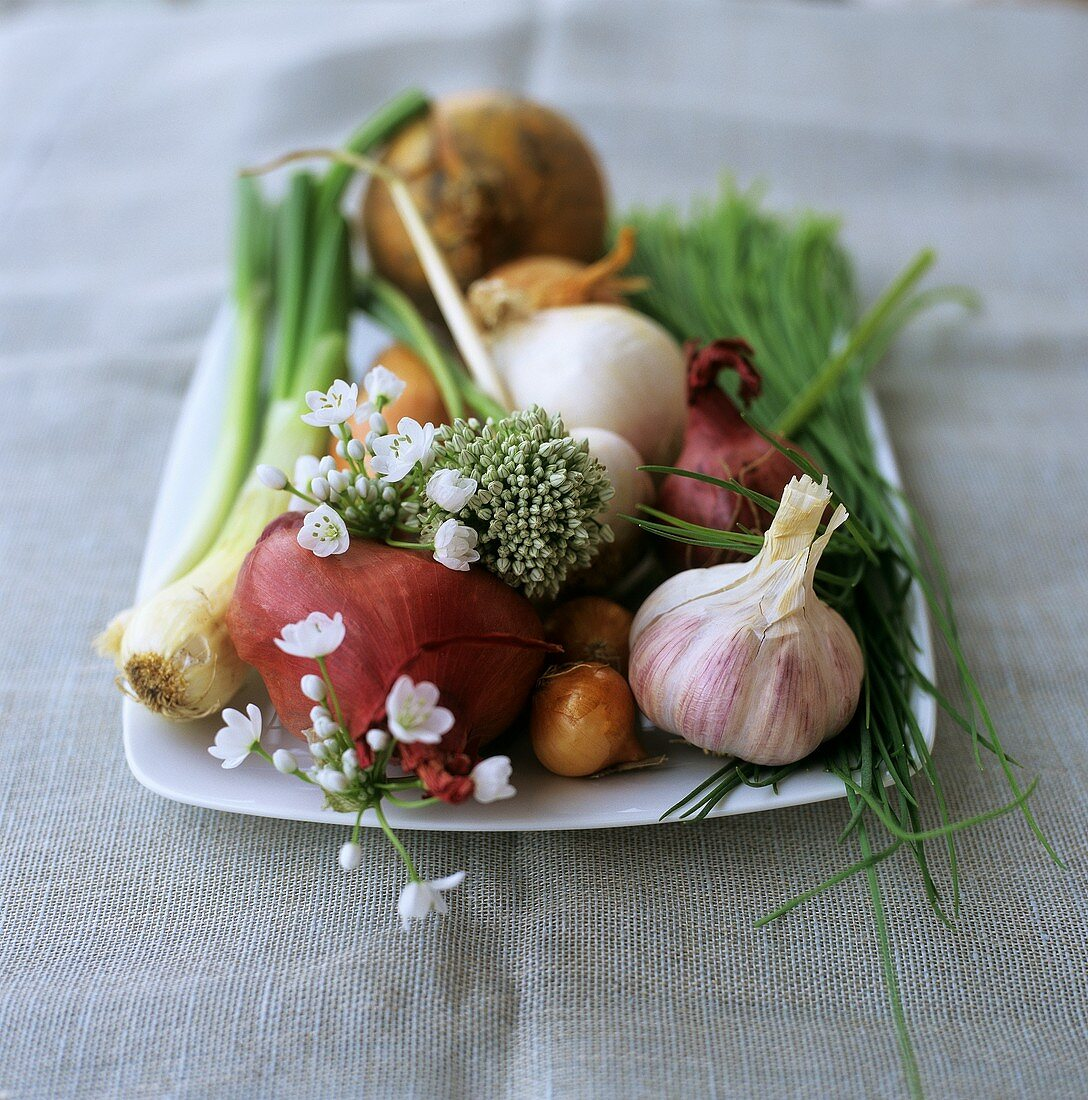 Still life with various types of onions and chives