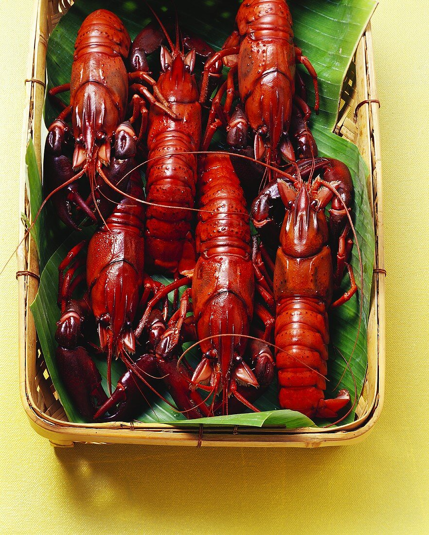 Cooked freshwater crayfish