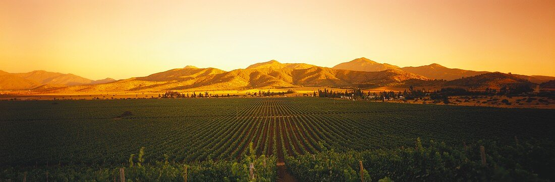 Wine region at sunset, Casablanca Valley, Chile