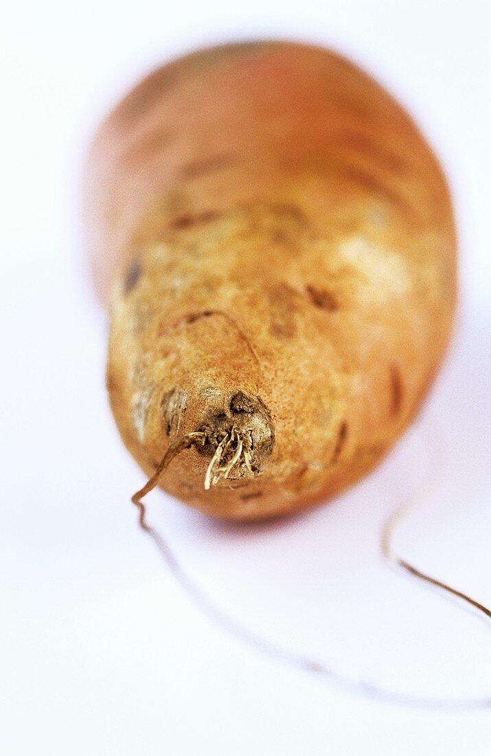 Kumera (sweet potato)