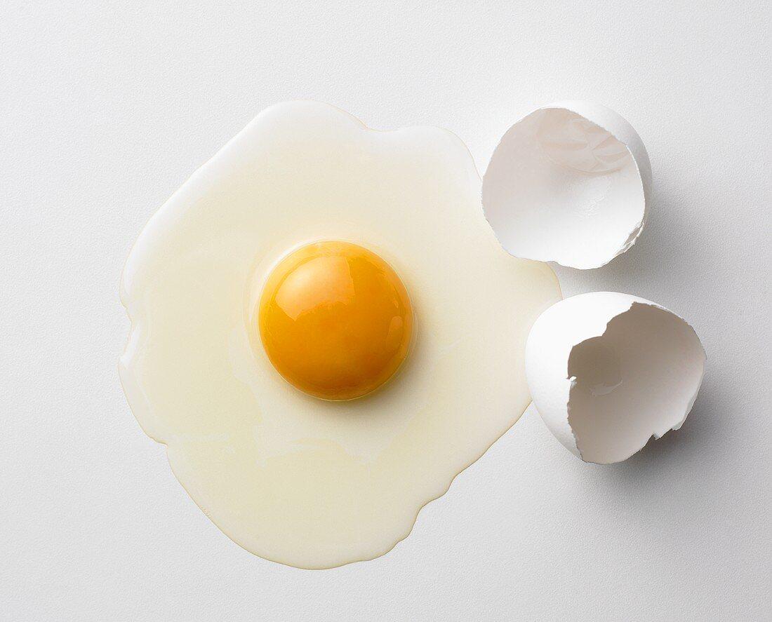 An egg, broken open