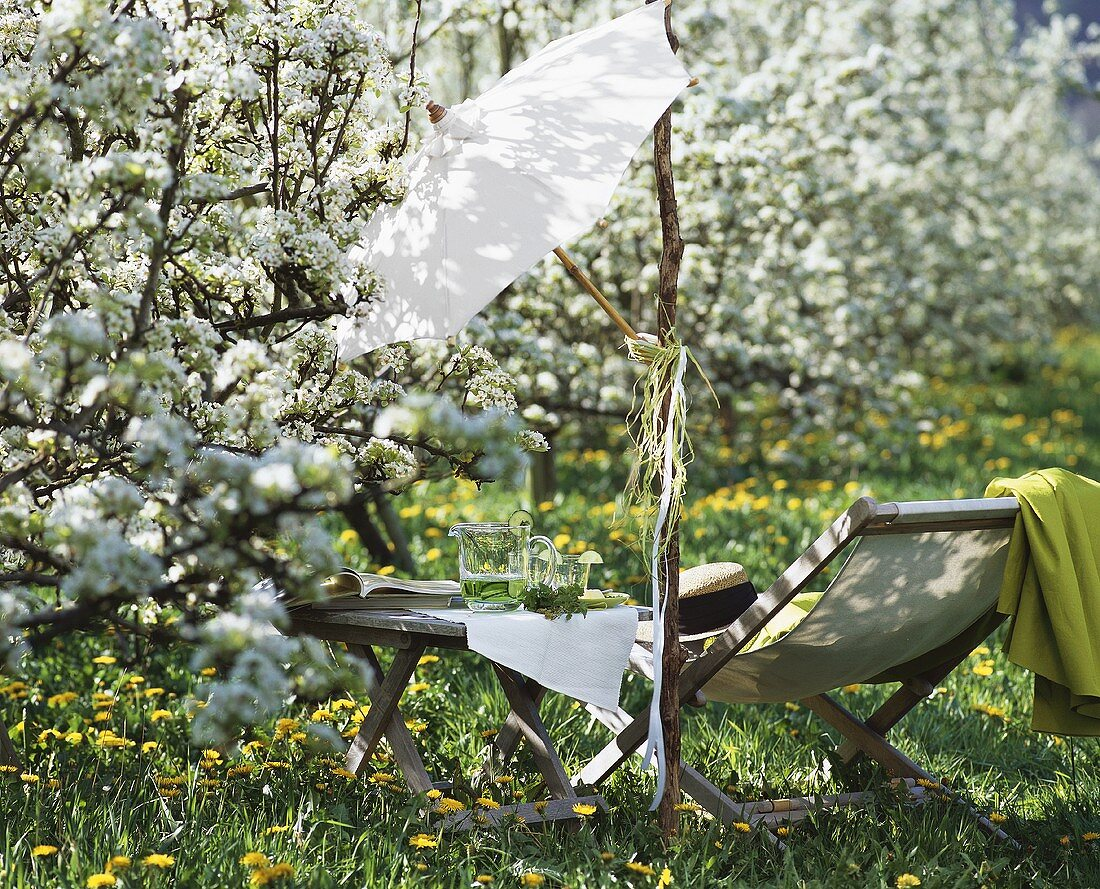 Picnic in a dandelion meadow with flowering pear trees
