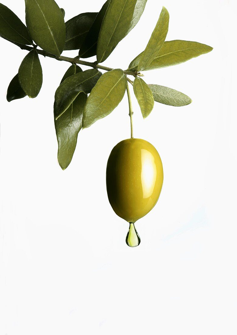 Olive oil dripping from an olive