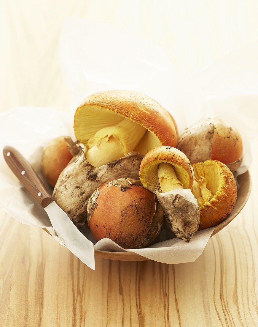 Caesar's mushrooms in a wooden bowl