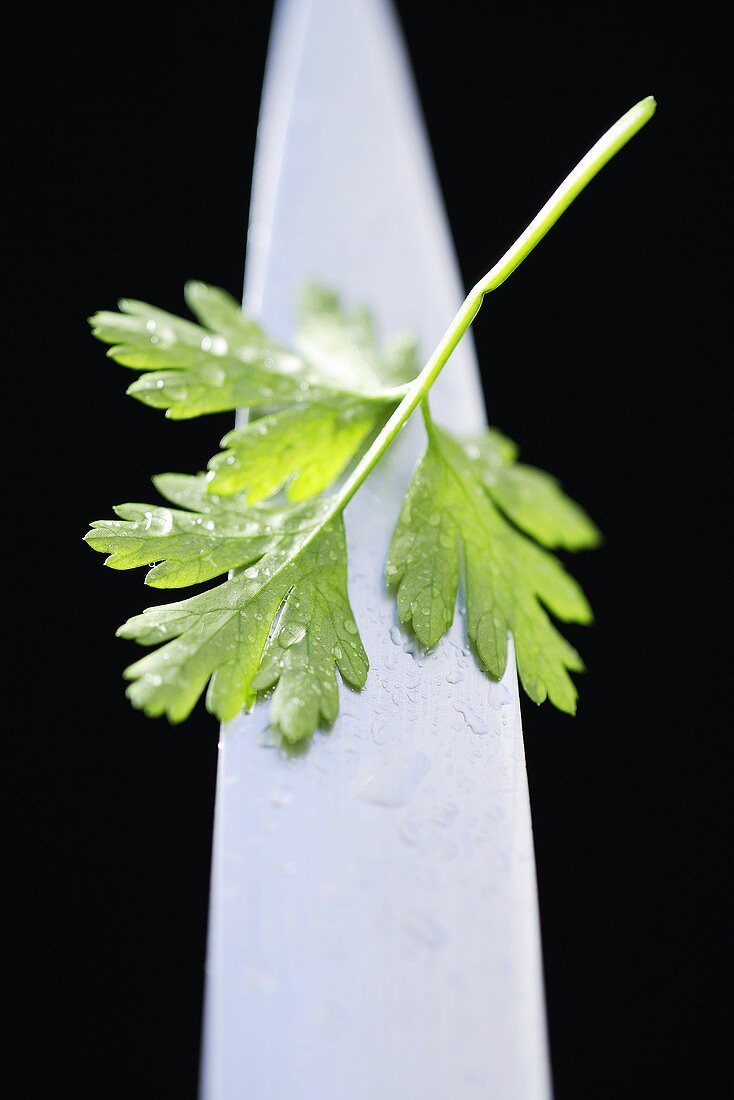 Parsley on the point of a knife (close-up)