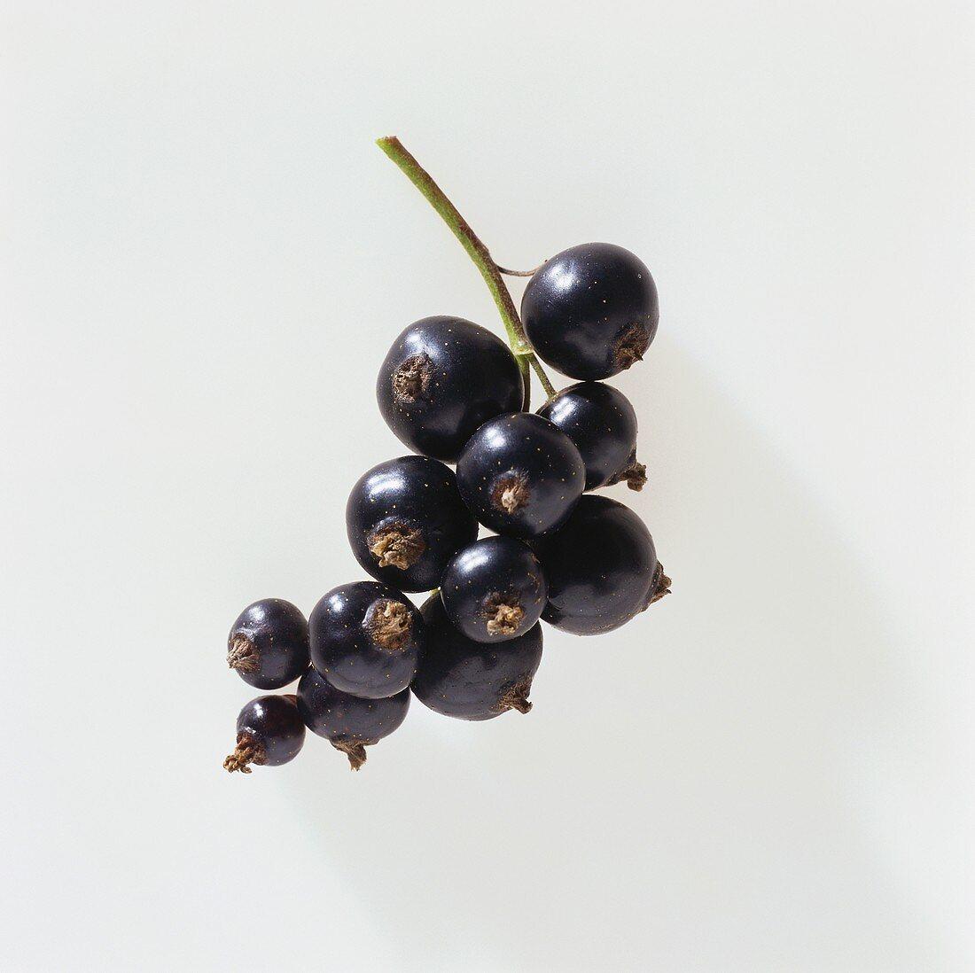 Blackcurrants on white background