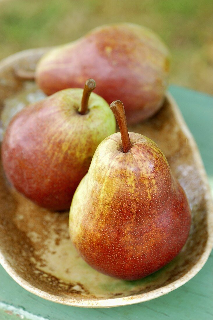 Three red Williams pears in a bowl