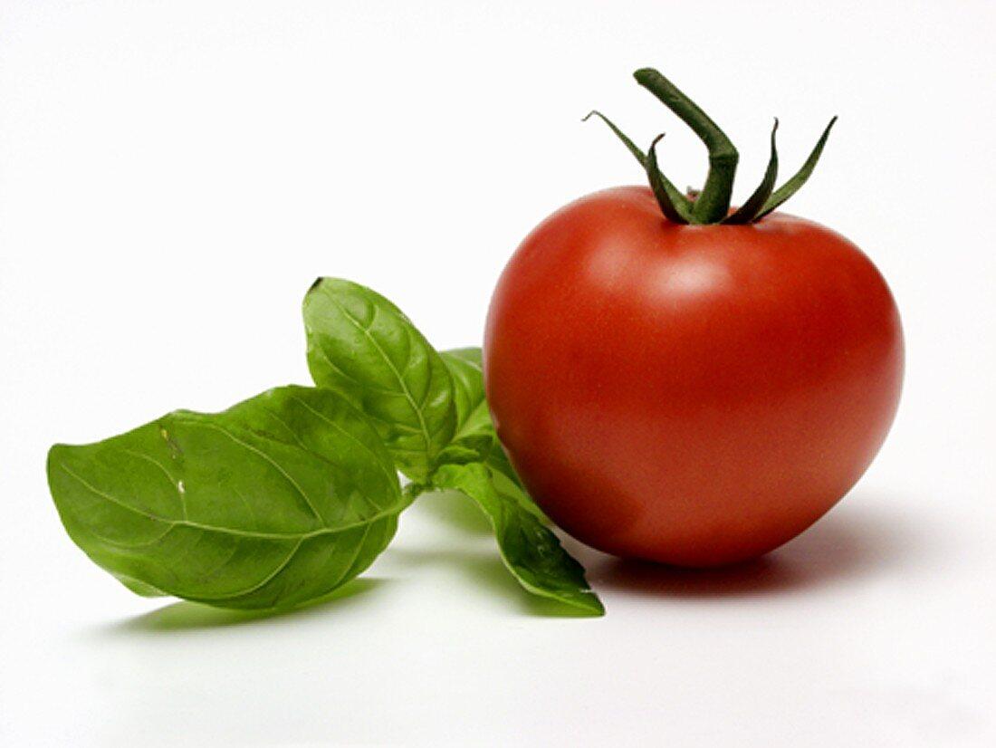 One Tomato with Fresh Basil