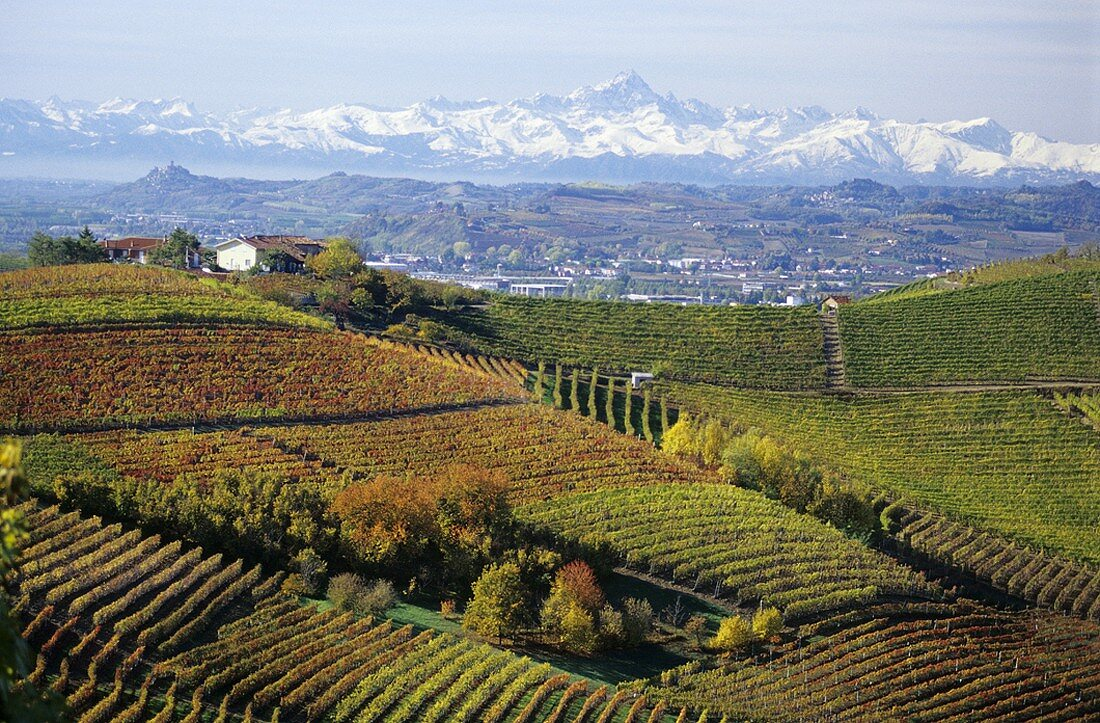 Barbaresco wine-growing region, Piedmont, Italy