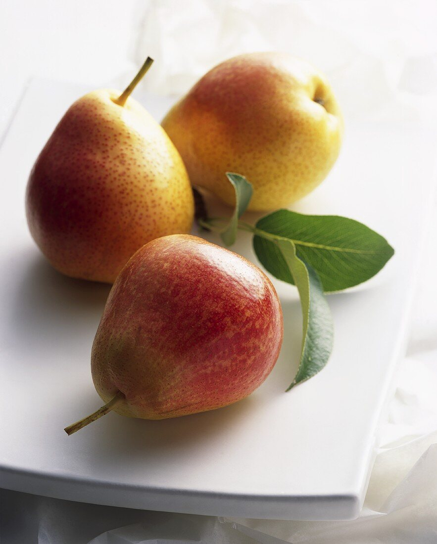 Three pears (variety: Forelle)