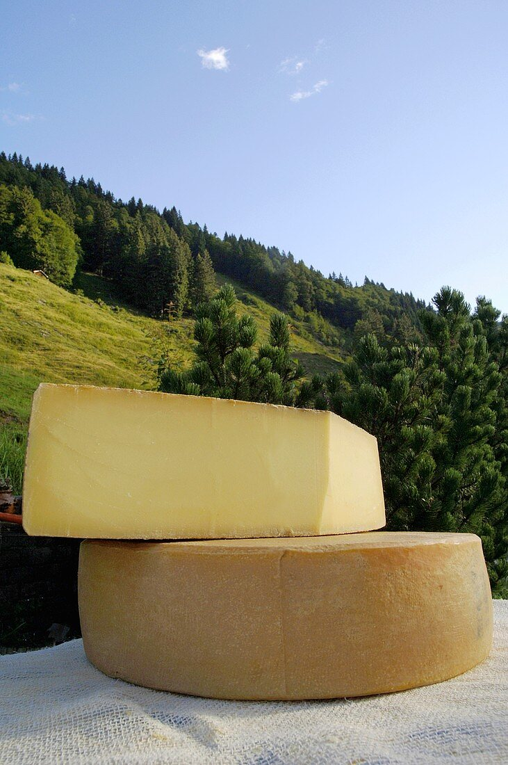 Cheeses against a mountain landscape