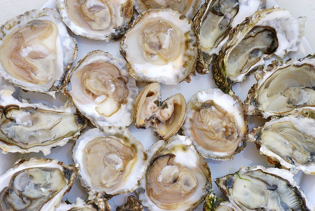 A clam surrounded by fresh oysters