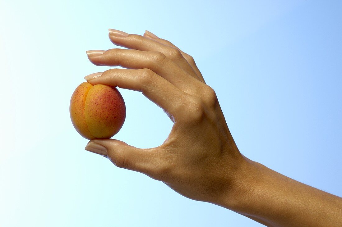 Woman's hand holding an apricot