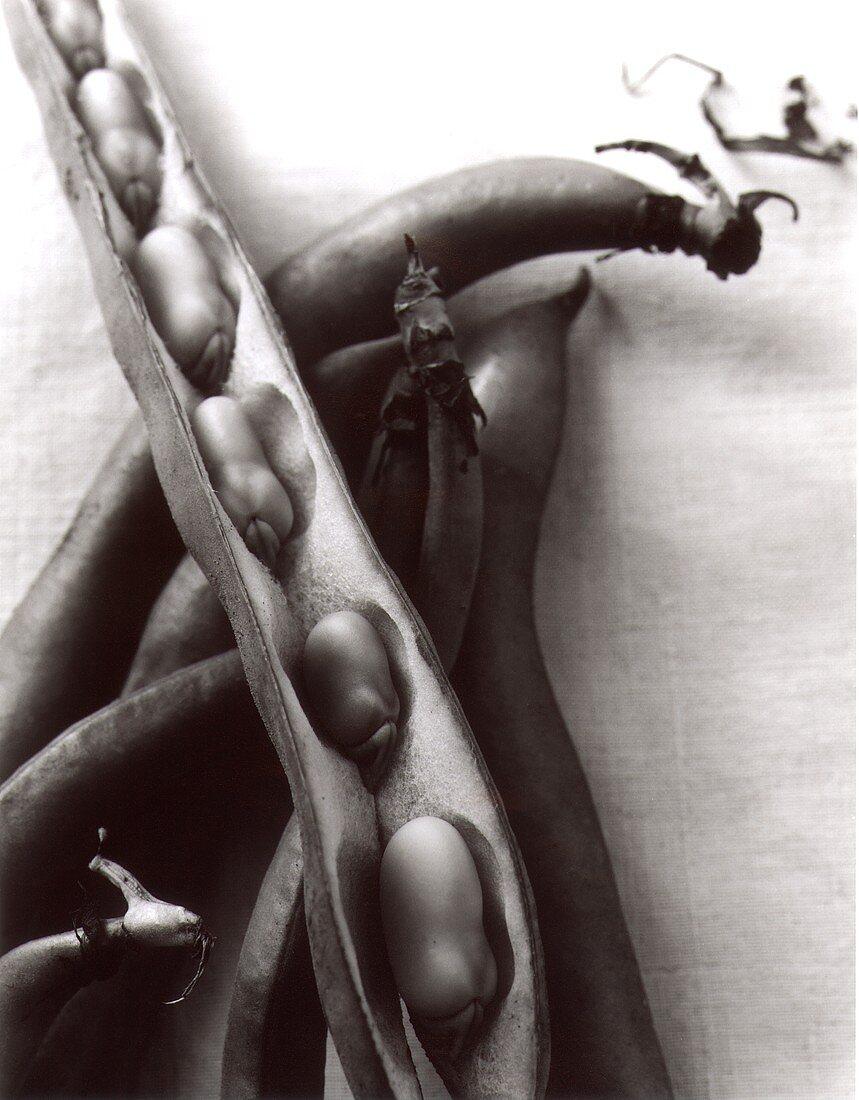 Bean pods (b/w photo)