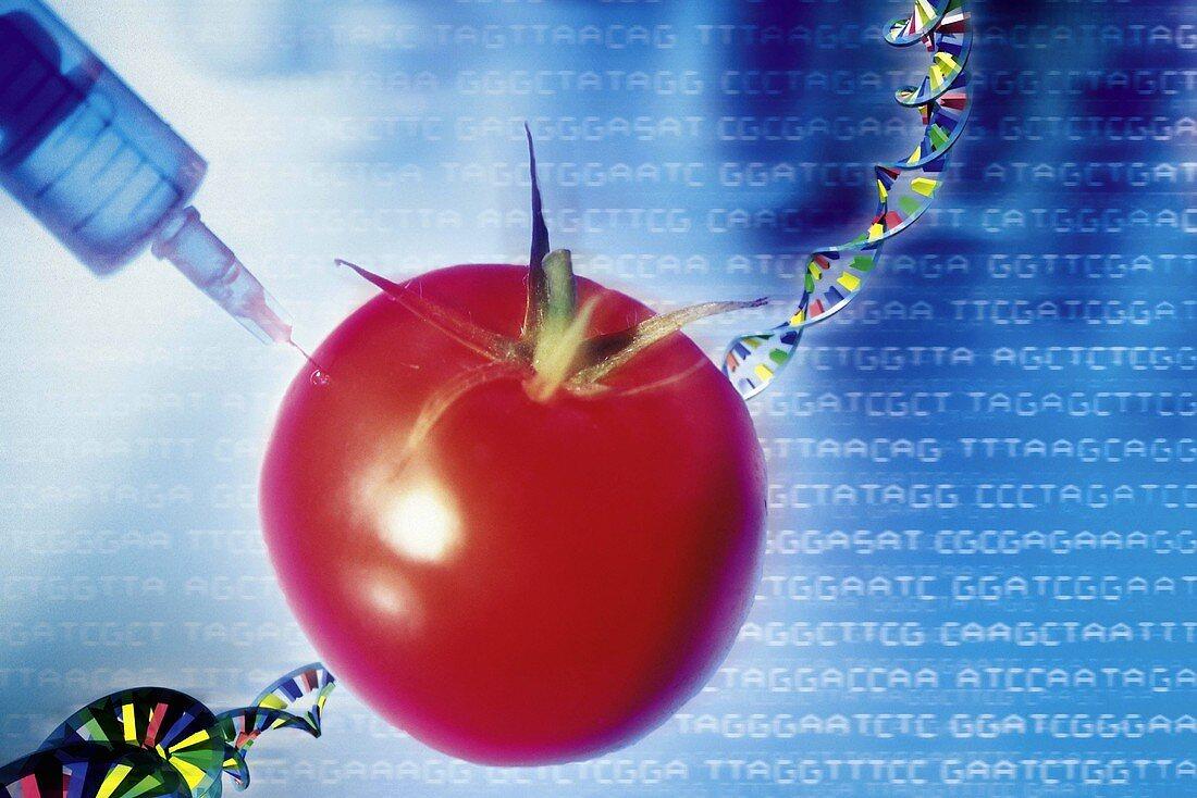 Genetic modification of a tomato