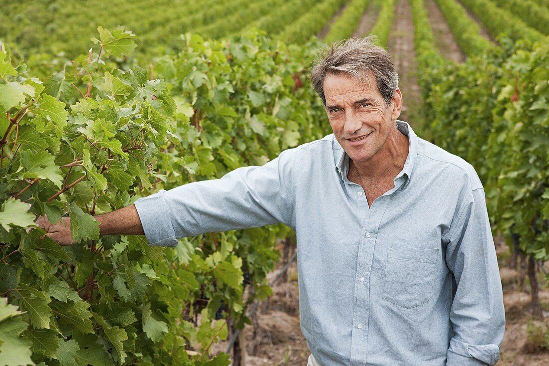 A man in a vineyard
