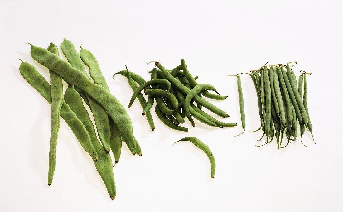 Green beans: French beans, Bobby beans, pole beans