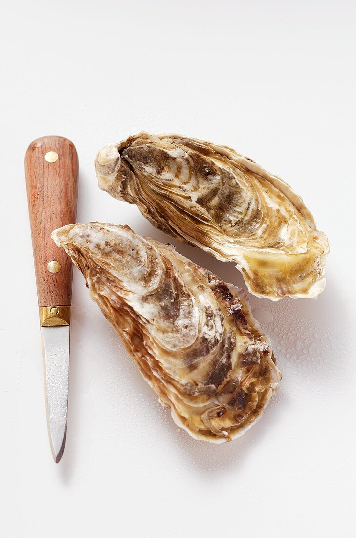 Fresh oysters with oyster knife