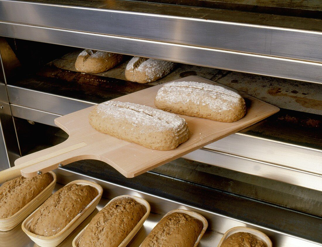 Loaves of bread being put into the oven