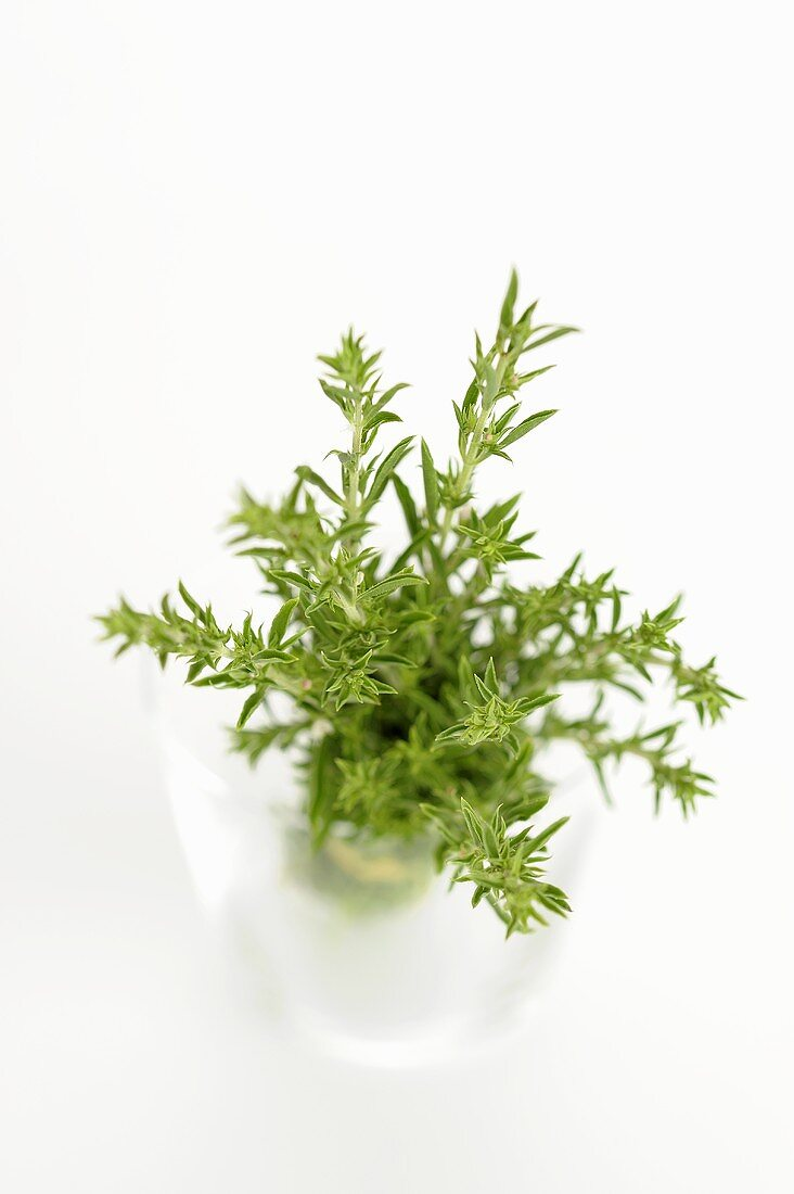 Fresh thyme sprigs in a glass of water