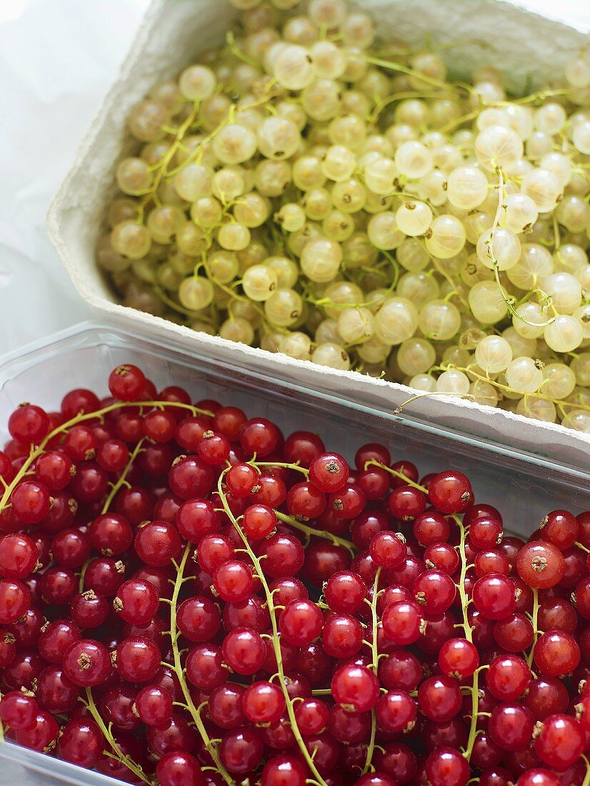 Red and white currants in containers