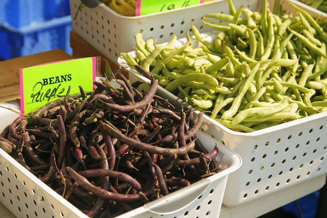 Organic Purple and Green Beans at Farmer's Market