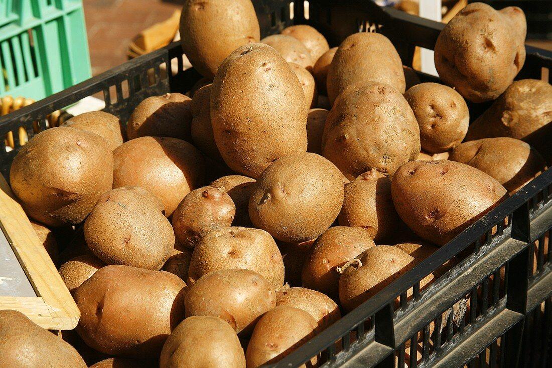 Fresh Organic Potatoes in Crates at Farmer's Market